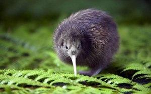 kiwi-bird-page
